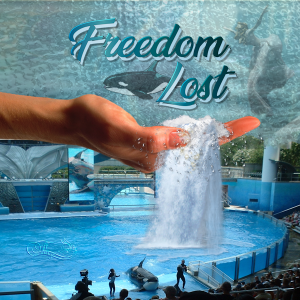 freedom-600
