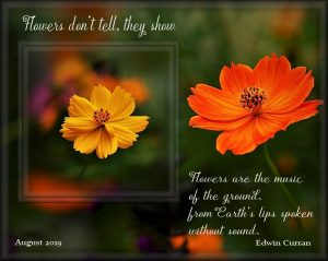 flower-quote