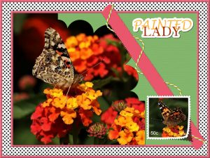 butterfly-bingo-challenge