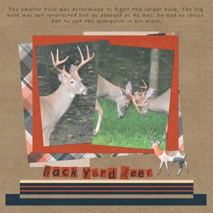 backyard-deer-600