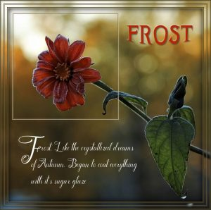 frosted-flower-a