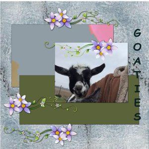 goaties-2