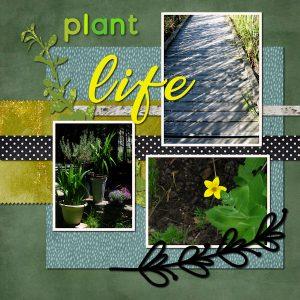 plantlife600
