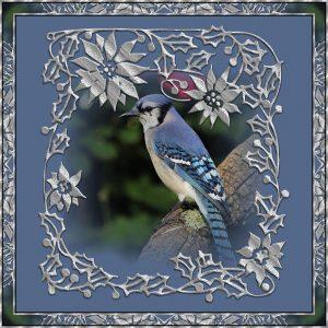 winter-frame-blue-jay