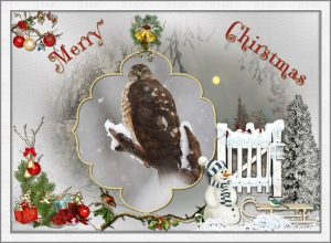 xmas-ecard-sharp-tailed-hawk