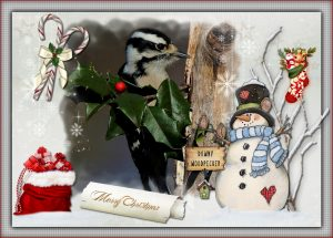 xmas-ecard-downy-woodpecker
