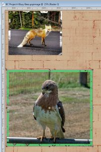 bc-project-4-furry-n-feathered-2