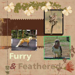 bc-project-4-furry-n-feathered-600