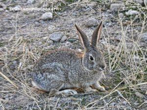 bunny-1
