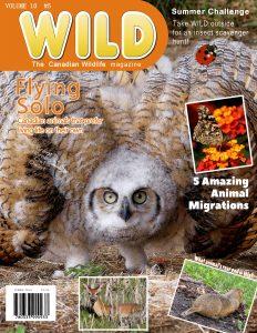wild-magazine-cover