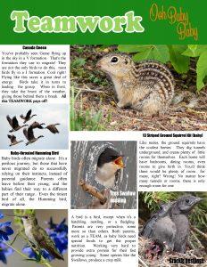 wild-magazine-page