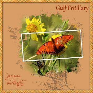 day-2-love-story-challenge-gulf-fritillary