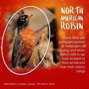 robin-male-colour-challenge