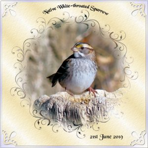 day-6-native-sparrow-series-2018-2