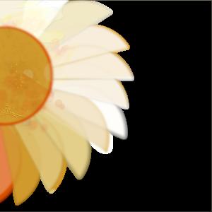 sun-sunflower