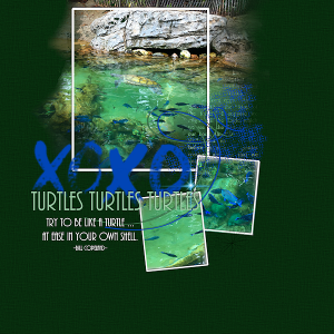 turtles_minka