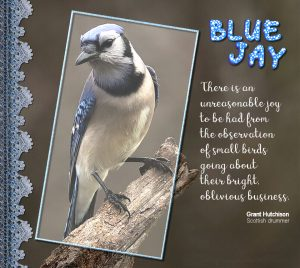 blue-jay-quote-2