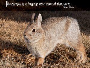 jj-bunny-quote