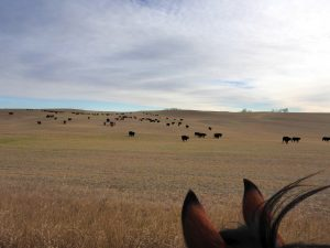 karls-cows-home