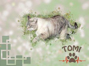 tomi-jpga