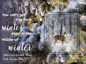 white-tail-deer-buck-2017-jpga