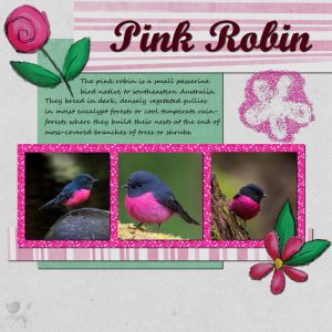 pink-robin-resized