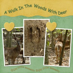 a-walk-in-the-woods-deer-600