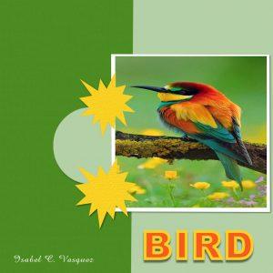lesson-1-bird