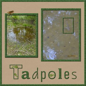 tadpole-600