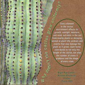 wisewords4cactus-600