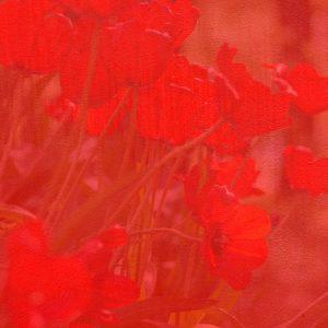 tulip-paper2
