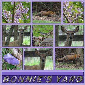 around-the-yard-may-5-2020-600