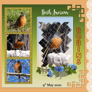 day-7-robins-page