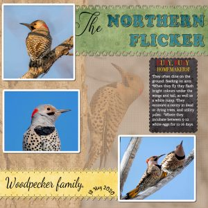 flickers-project-4