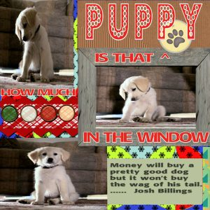 lab-6-module-1-experiment-1-title-puppy