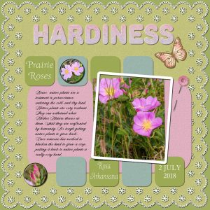 native-roses-project-5