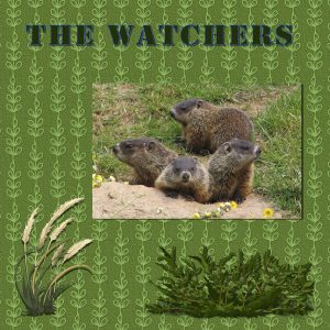 the-watchers-600
