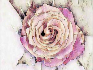 rose_pastel1