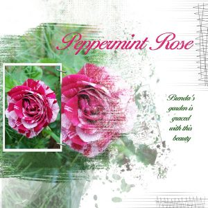 2020-64-peppermint-rose-mask-5-lady-22-600