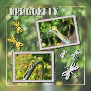 dragonfly-600