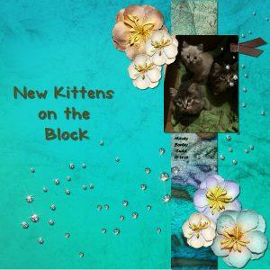 new-kittens-600