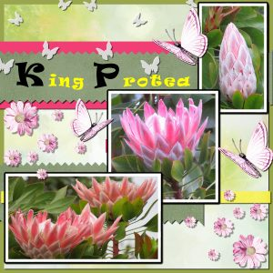 project-4-king-protea-600x600