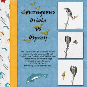 oriole-vs-osprey