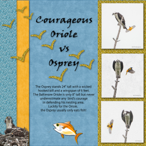oriole-vs-osprey-revised_600