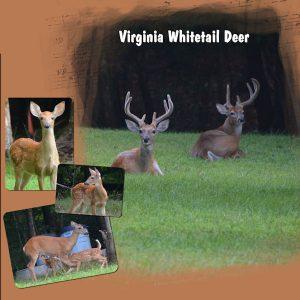 2020-7-25-back-yard-deer-template-6-lady22-600