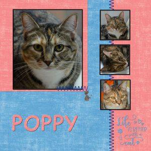 poppy-lab-6o2-600