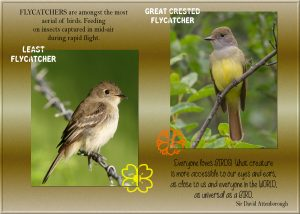 quote-flycatcher-writing-different
