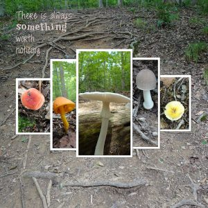 2020-8-6-mushroom-hike-jmadd-creativecanvas-no19-just-frames-temp5-600