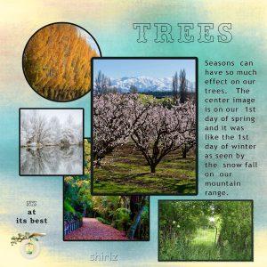 2020-sept-trees-600
