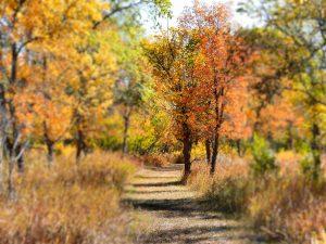 autumn-colours-danielson-park-17-sept-2